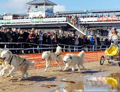 Hundeschlittenrennen mit Brandenburger Köpfen